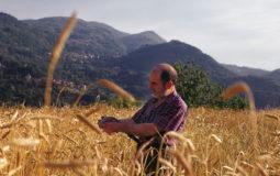 Farro IGP della Garfagnana