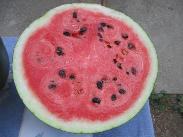 Cocomero Gigante - sezione del frutto