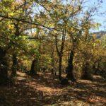 Dove nasce la Farina di castagne della Lunigiana DOP