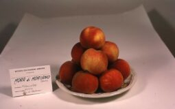 Mora di Moriano Dolfi - frutti