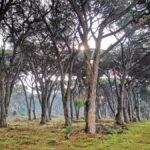 Parco di San Rossore