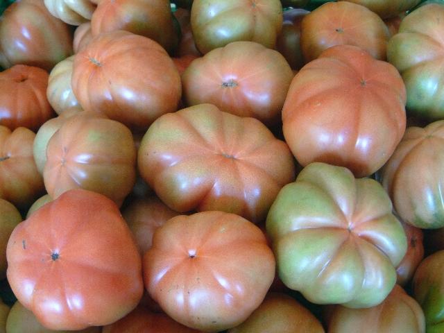 Pomodoro Canestrino di Lucca - frutti immaturi