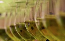 Degustazione di olio dop e igp a cura della regione toscana