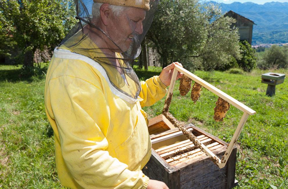 Apicoltore, Miele della Lunigiana DOP