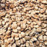 Le fasi di lavorazione per la Farina di castagne della Lunigiana DOP