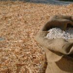 Lavorazione del fagiolo di Sorana IGP