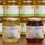 Miele di acacia e castagno della Lunigiana DOP