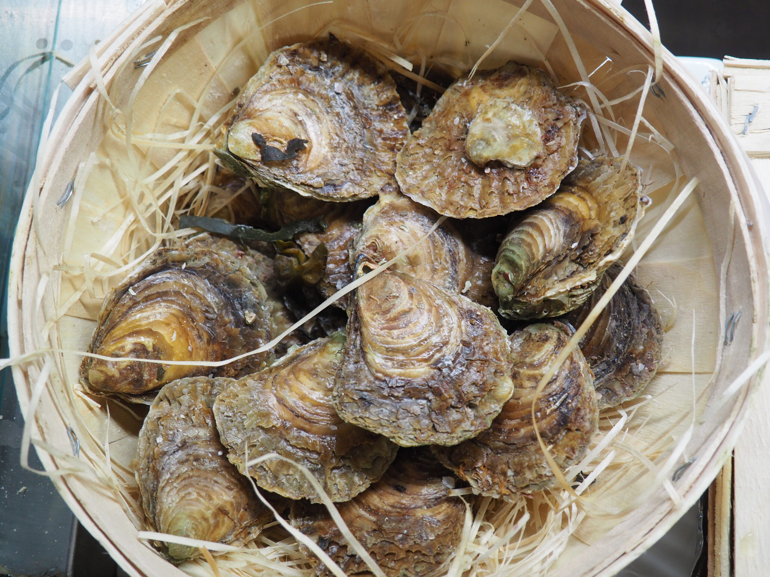 Le ostriche piatte