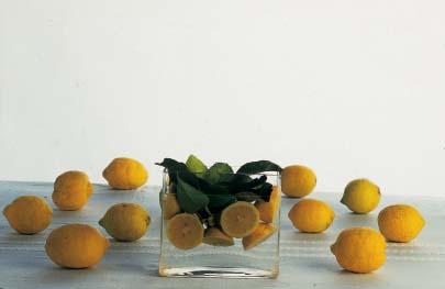 Limone massese