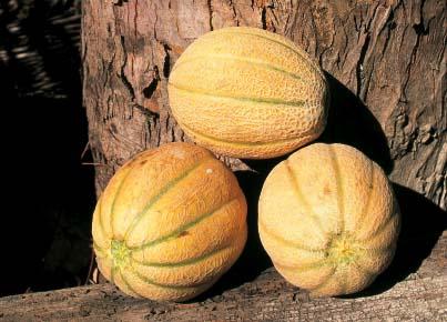 Melone della Val di Cornia
