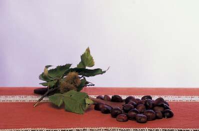 Castagna perella del Pratomagno