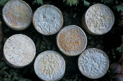 Pecorino del Casentino