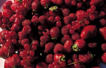 Frutti del sottobosco delle Montagne Pistoiesi