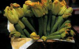 Zucchina sarzanese
