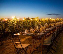 Turismo del Vino: mangiare in cantina tra le vigne