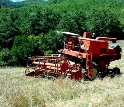 Agricoltura, il farro della Garfagnana. Foto di Andrea Tortelli