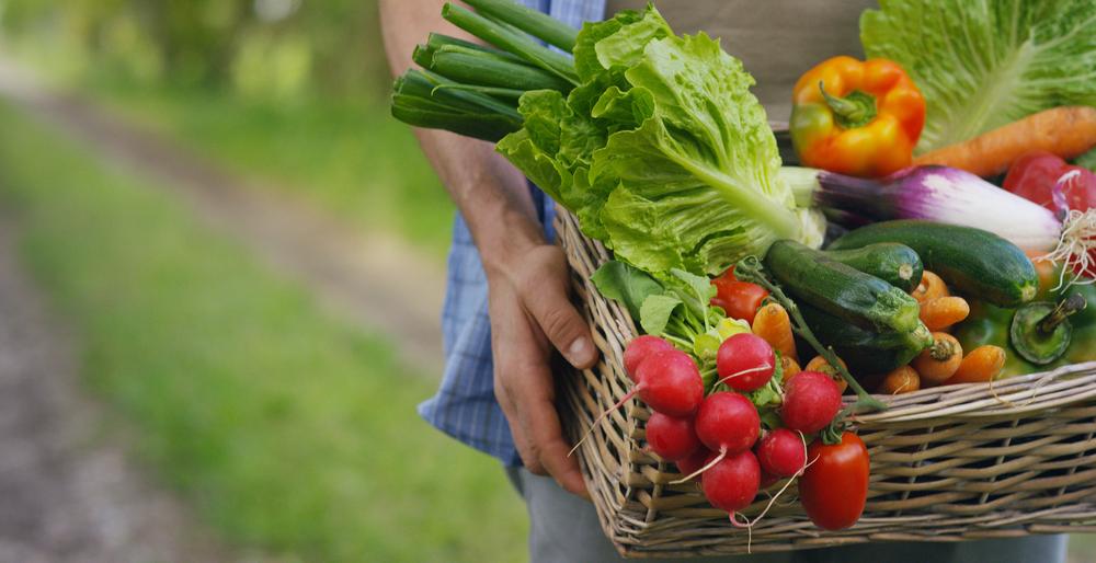 Cestino con verdure (cavoli, carote, cetrioli, ravanelli e peperoni) nelle mani di uno sfondo contadino della natura Concetto di biologico, prodotti biologici, bioecologia, coltivati da soli, vegetariani.