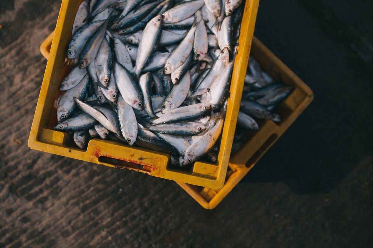 Pesce fresco e stagionale della Toscana