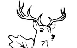 Solo cervo