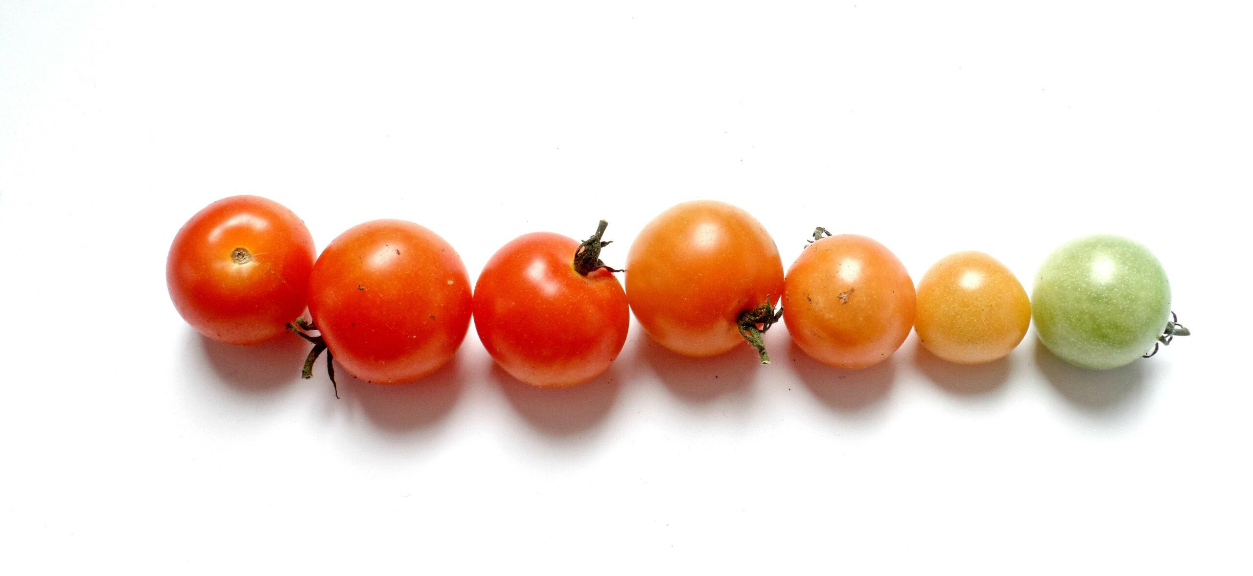Giornata mondiale dieta mediterranea