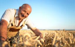 Agricoltura e investimenti. Foto di Aleksandar Malivuk